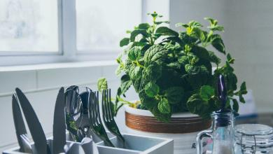 Photo of 6 Super Simple Ways to Create a More Eco-Friendly Apartment