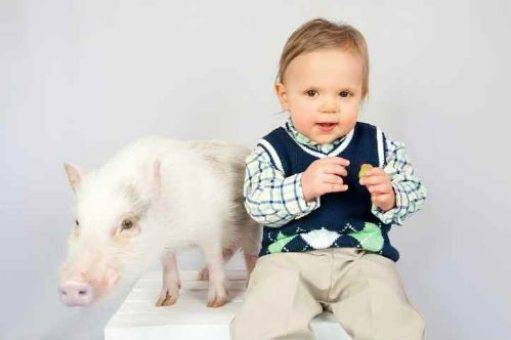 boy and pig