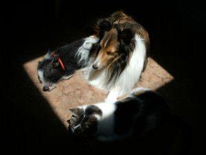 Friends sharing the sun!