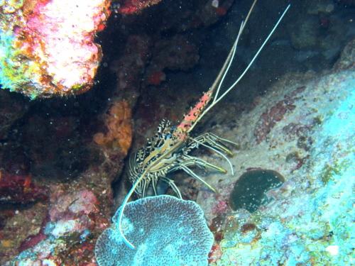 ルカン礁ダイビングの様子