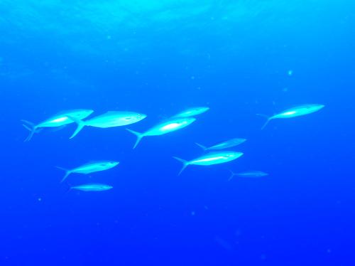 ダイビング渡名喜島