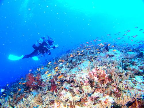慶良間諸島ダイビングの様子
