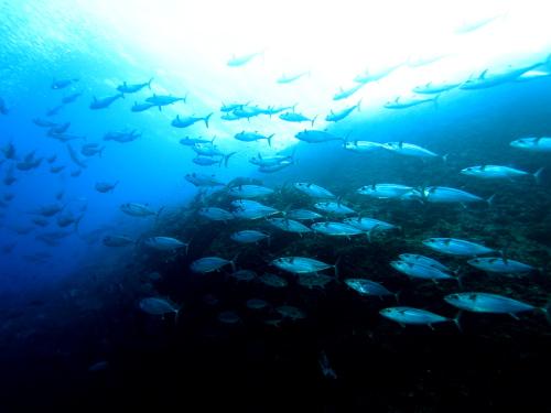 沖縄遠征ダイビング