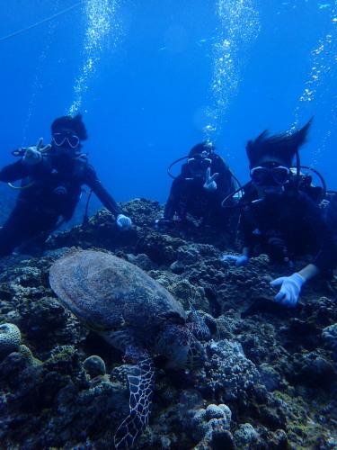 沖縄体験ダイビング