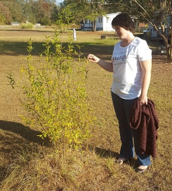 picking-leaves-2