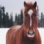 Iphone Xr Horse Walpaper 828x1792 Wallpaper Teahub Io