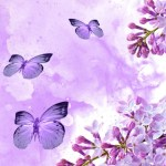 Purple Butterfly Wallpaper Iphone Resolution Iphone Wallpaper Butterfly Purple 720x1080 Wallpaper Teahub Io