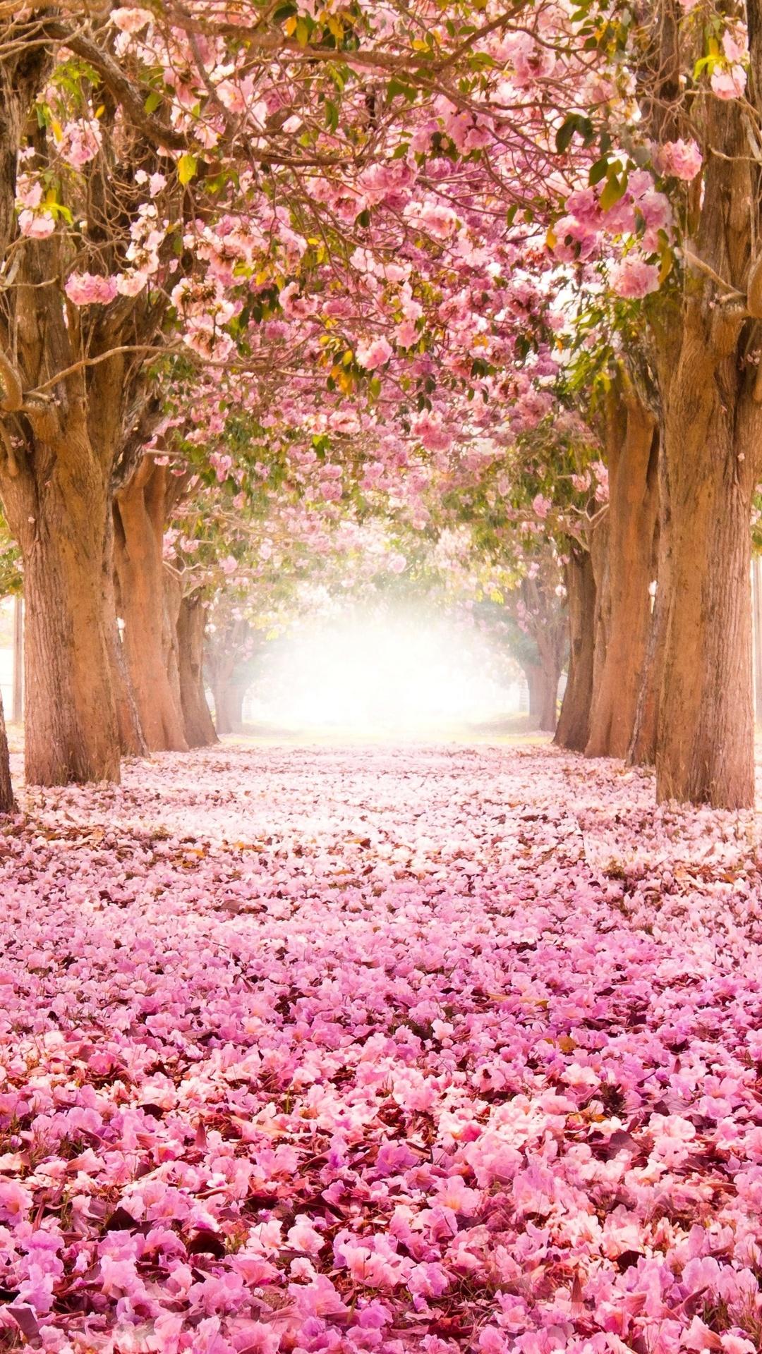 Free Cherry Blossom Iphone Photo Cherry Blossom Sakura Wallpaper Iphone 1080x1920 Wallpaper Teahub Io