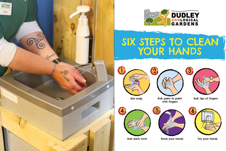 Hand washing with a Stallette mobile sink where there are no permanent hand washing facilities at Dudley Zoo