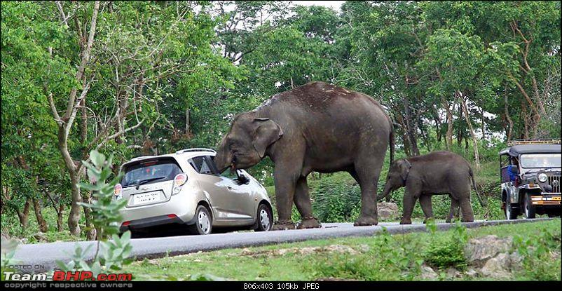 Elephant Attack In The Bandipur Forest Area Page 4