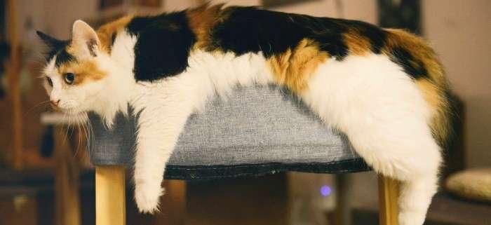 Katze in Katzenvideo hat keine Motivation