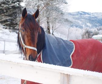 Yarrah Boko er tilbake etter litt av et eventyr i Frankrike i vinter. Nå får han nyte i livet i luftegården og se på stallkompisene trene, før vi lader batteriene mot våren og sommerens oppgaver.