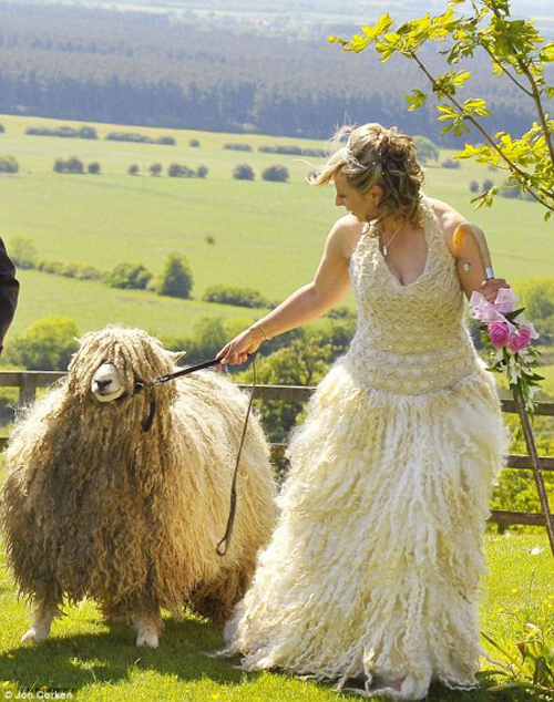 bride with sheep Funny Wedding Pictures, Bad Wedding Photos,Wedding disasters, disastrous weddings, ugly wedding dresses, bad wedding dresses, wedding photography, wedding photographers, horrible weddings, wedding invitations, affordable weddings, worst wedding pictures