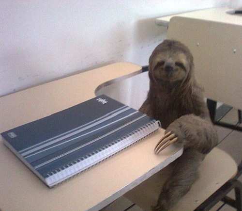 sloth sitting at school desk Bad Family Portraits, Bad Family Photos, Ellen, funny family photos, worst family pics, funny pictures, awkward family photos, wtf, ugly people, stupid people, crazy people, people of walmart