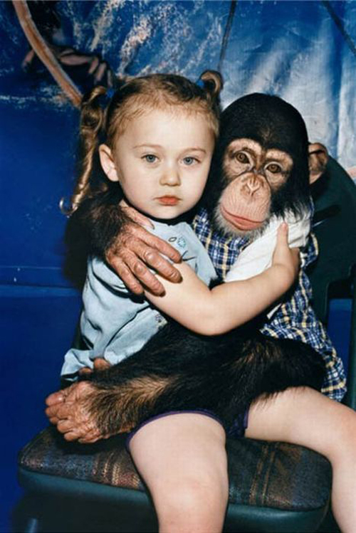 Little Girl Hugging Monkey chimpanze