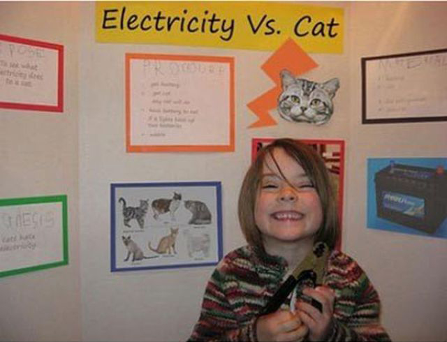 Electricity vs Cat ~ 36 Funny School Science Fair Projects!