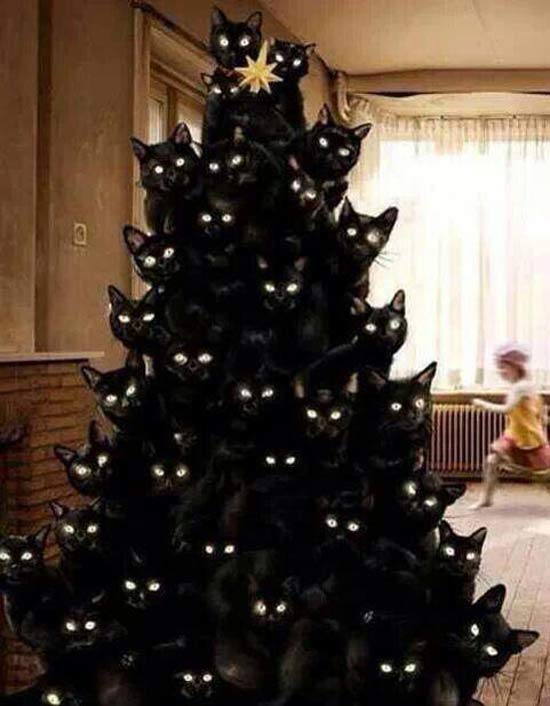 26 Funny Christmas Photos for the Whole Family ~ Christmas tree made of cats