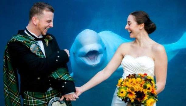 Aquarium Whale Photobomb ~ 14 Funny Wedding Pictures