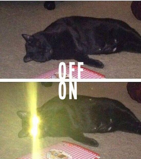 Laser Kitty On Off ~ 17 Funny Pics & Memes