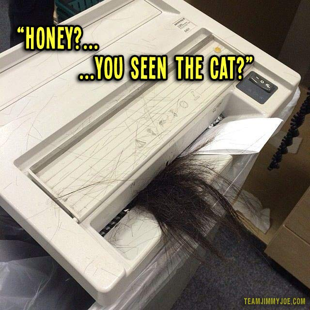 Have you seen the cat? ~ cat in paper shredder