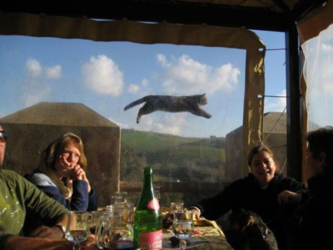 Picture of people in restaurant with cat flying past a window