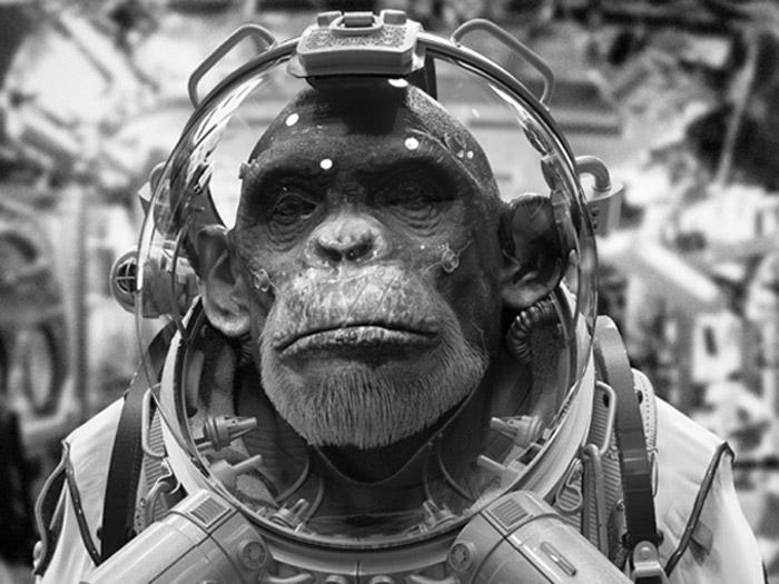 Vintage portrait of chimpanzee in space suit