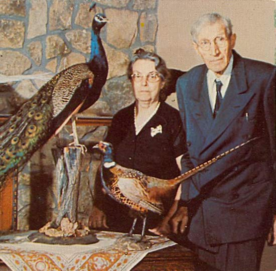 Funny Awkward Family Photos: old couple with stuffed peacocks