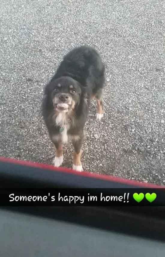 Funny Snapchats ~ funny dog snarling