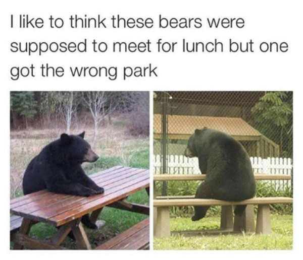 Bears at picnic tables waiting for one another for lunch, wrong park