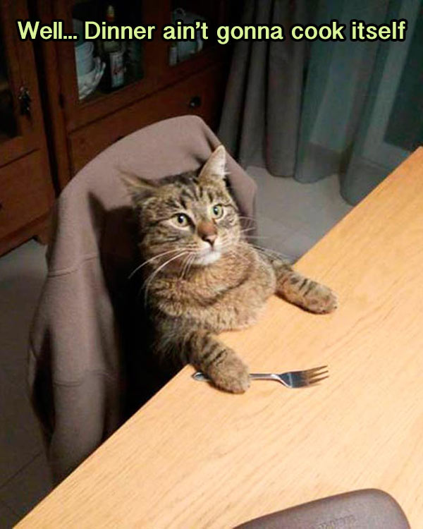 funny cat meme at dinner table not gonna cook itself
