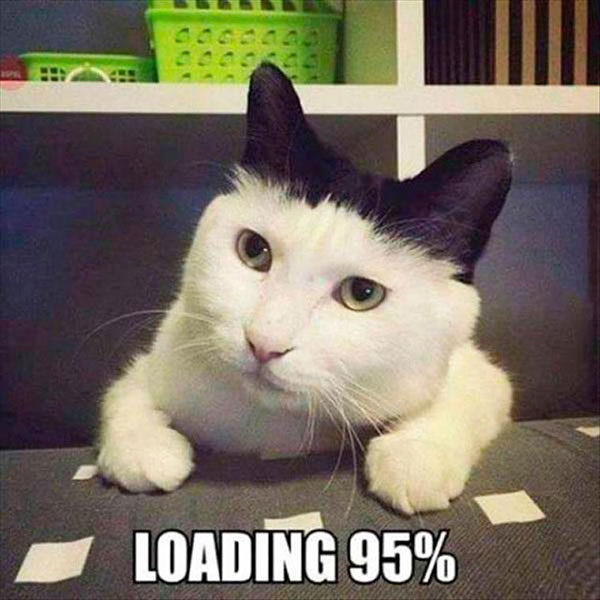 33 Funny Pics of the Day ~ Cat Loading 95%