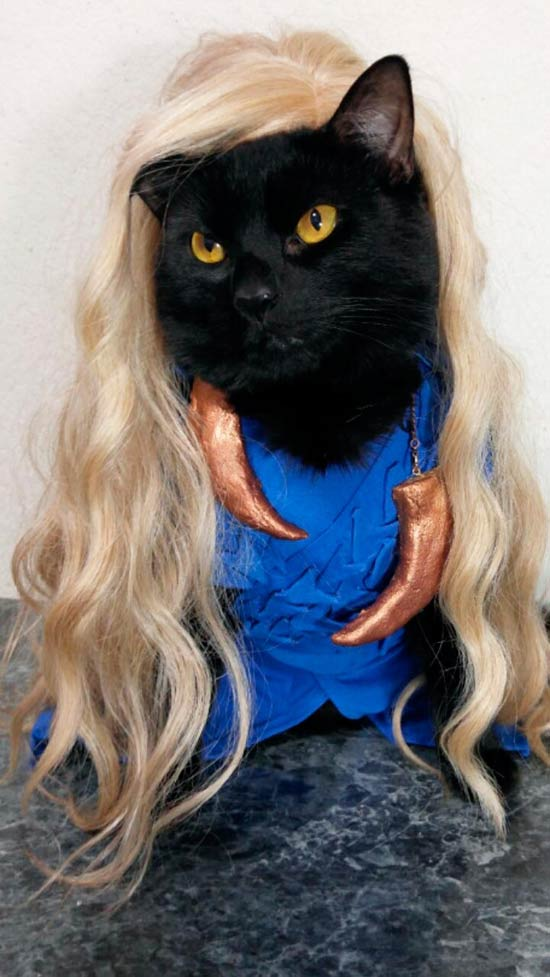 Funny Pics ~ 37 Outrageous Images ~ cat cosplay game of thrones