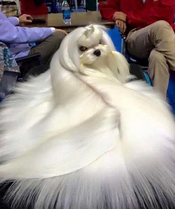 fancy dog princess ~ funny animals that take better pictures than you