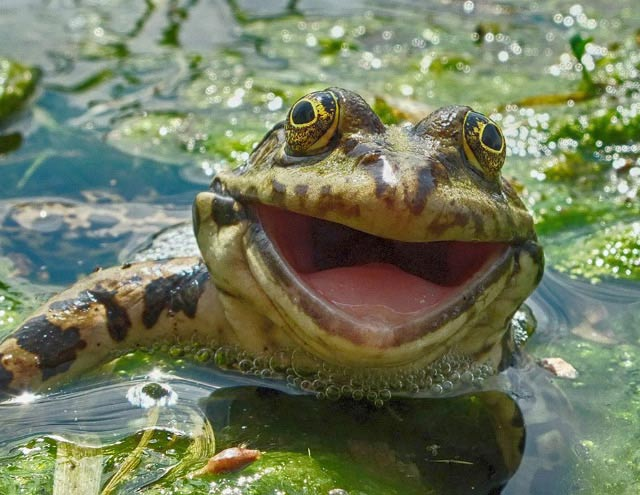 Happy smiling frog ~ funny animals that take better pictures than you