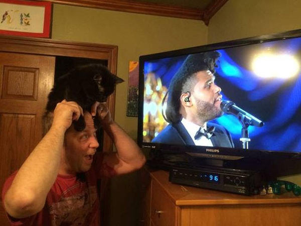 The Weekend; Mad with cat on head hair: funny pics