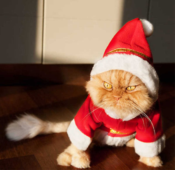 Funny Christmas, angry, grumpy cat