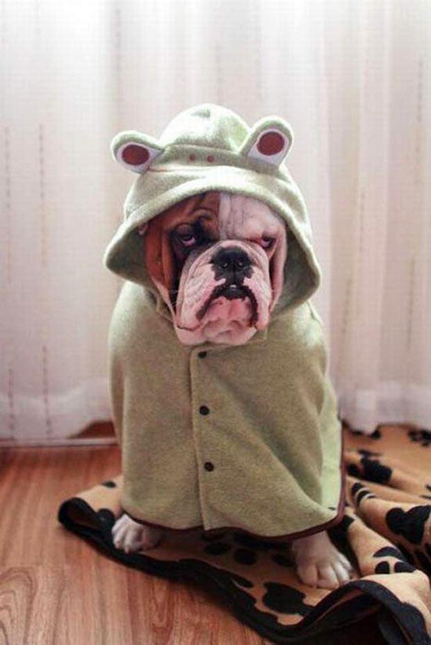 Funny Pics & Memes ~ dog bathrobe