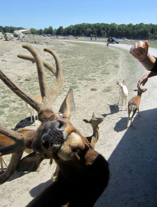 Funny Pics & Memes ~ funny deer