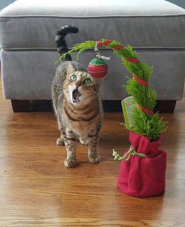 41 Funny Christmas Photos ~ cat amazed by tree ornament