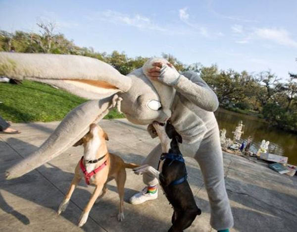 33 Funny Pics ~ dogs tracking man in bugs bunny costume