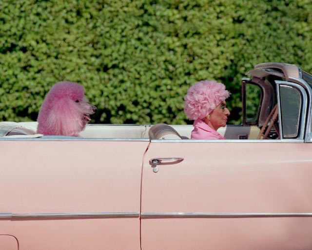 27 Funny Family Photos & Vintage Snaps ~ Grandma in her pint Cadillac with poodle