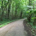 Ohio-600km-Beautiful-canopy