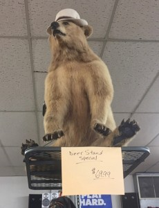 photo of stuffed bear in Pat's Army Store