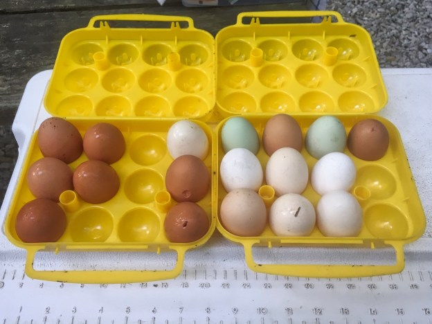photo of raided egg carriers