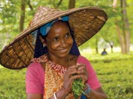 Assam_tea_picker MA11