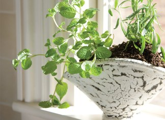 Herbs from the Tea Garden