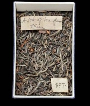 The dried tea leaves found in London's Natural History Museum.