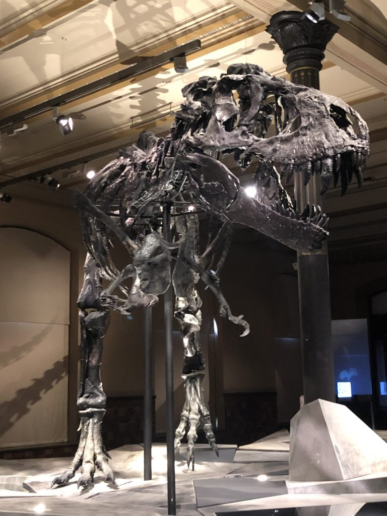 Tristan the T-Rex at the Naturkunde Museum Berlin