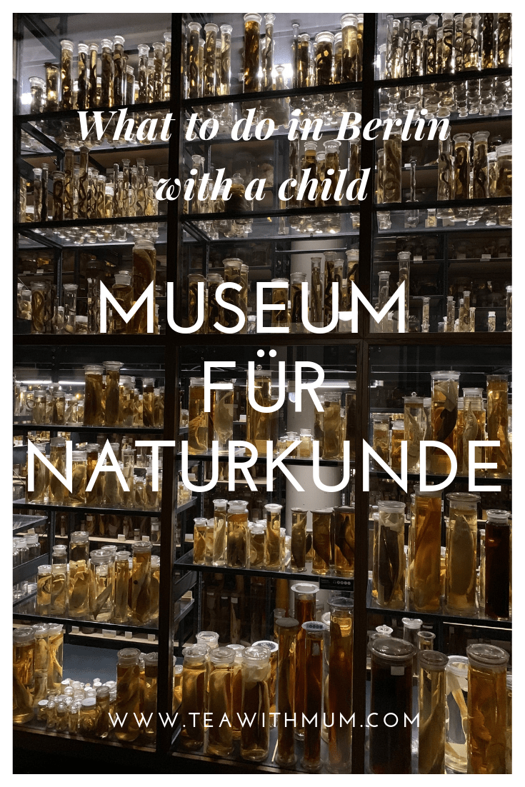 Museum für Naturkunde - Natural History Museum - what to do in Berlin with kids