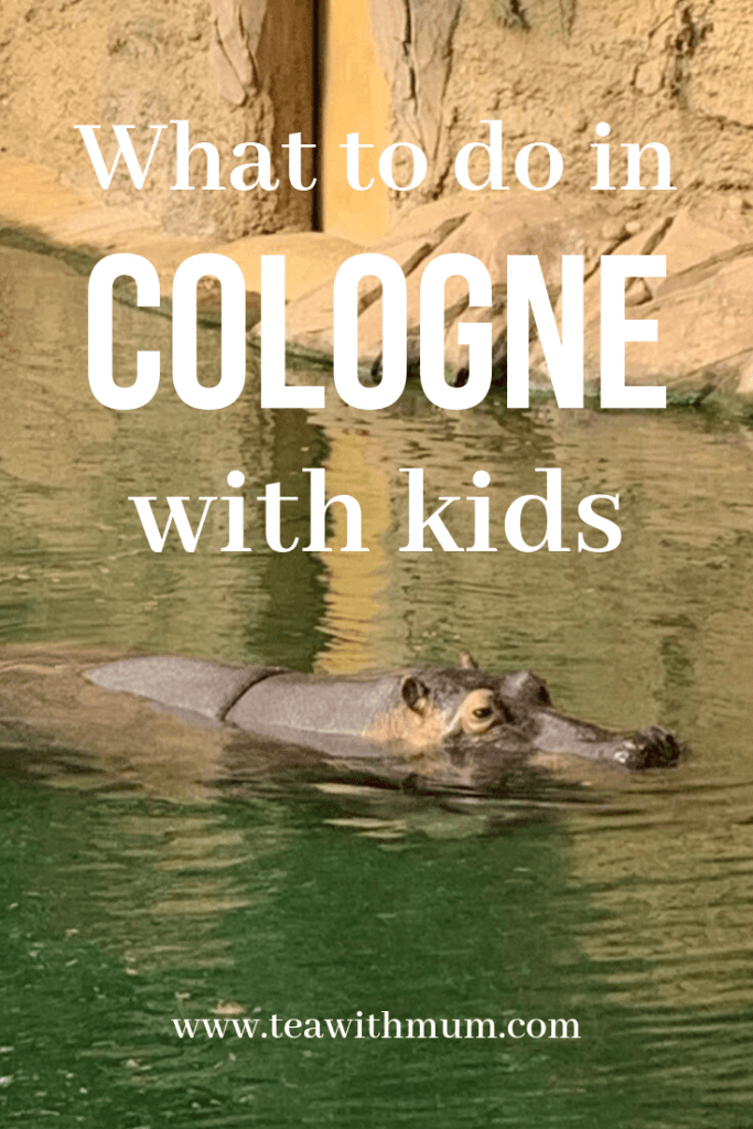 What to do in Cologne with kids, with hippopotamus from the Cologne zoo